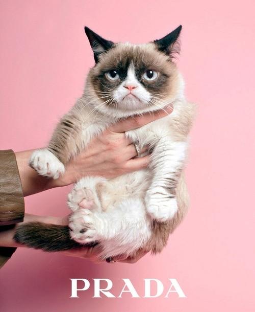 Мем Grumpy cat prada